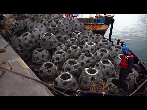 Empresa Portuaria Quetzal - Programa de protección ambiental